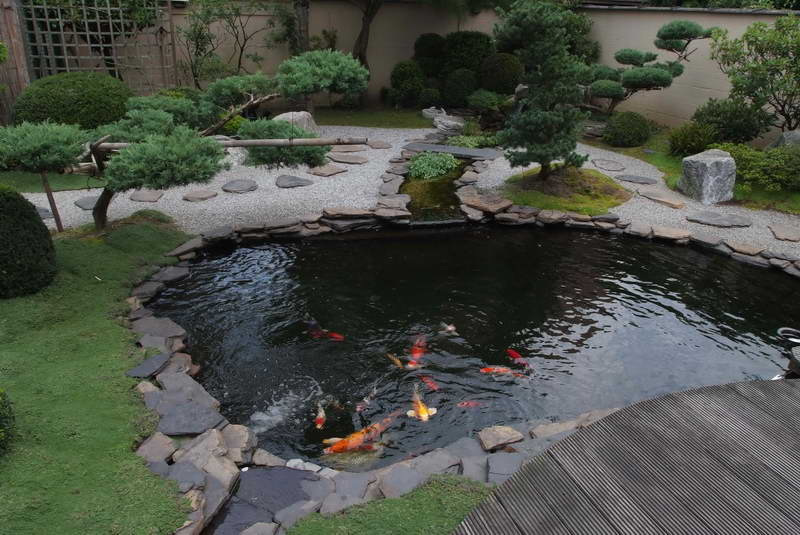 what-fish-to-put-in-garden-pond